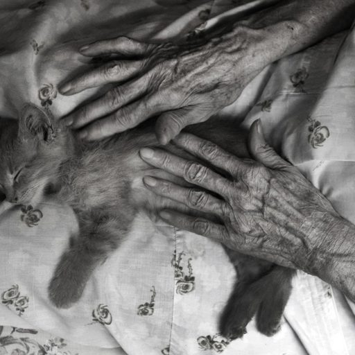 Madje Steber plays with a kitten at her daughter's house in Miami, Florida during a weekend visit. Madje, a scientist, suffered from memory loss the last 9 years of her life. Still image from the project, Rite of Passage.