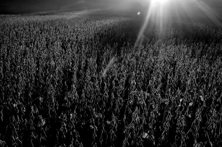 Photo by Danny Wilcox Frazier / VII. Soybeans at sunrise near Iowa City, Iowa. Farmers in Iowa and throughout the country have been hit hard economically during the Trump administration's trade war with China.